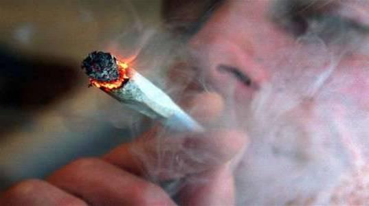 دراسة أمريكية: الماريجوانا