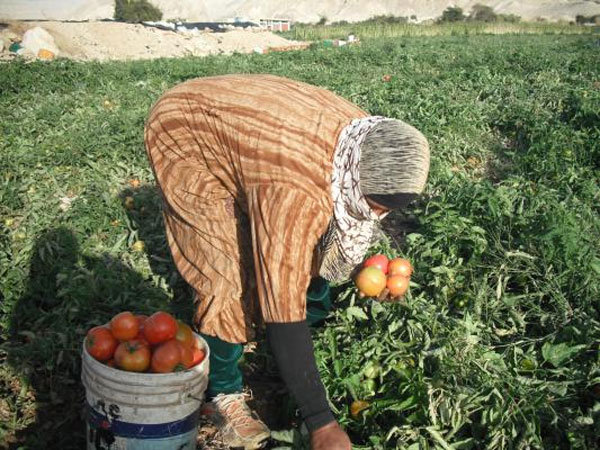 280 مليون دولار خسائر القطاع الزراعي بالأردن بسبب اضطرابات المنطقة