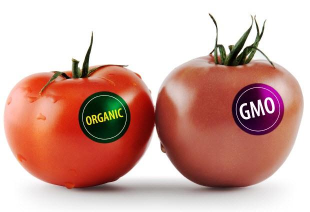 تقرير: الأغذية الأمريكية المصنفة