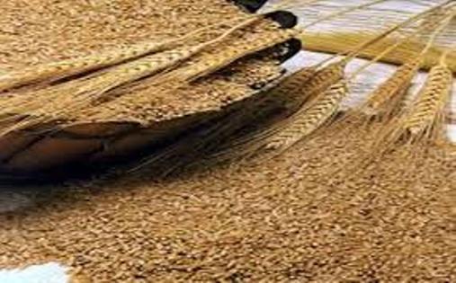 الأردن يشترى 100 ألف طن شعير بـ 21.95 مليون دولار