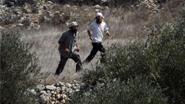 مستوطنون يقتلعون 100 شجرة في 'تل الرميدة' في الخليل