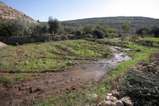 الاحتلال يضخ مياه عادمة إلى أشجار الزيتون شرق بيت لحم