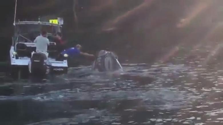 بالفيديو: حوت يستغيث بصيادين لإزالة كيس بلاستيكي من فمه
