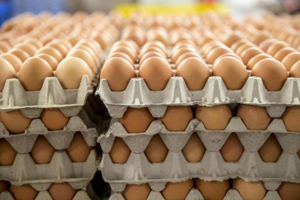 الشرطة تقبض على تاجر يسوّق بيضا فاسدا في رام الله