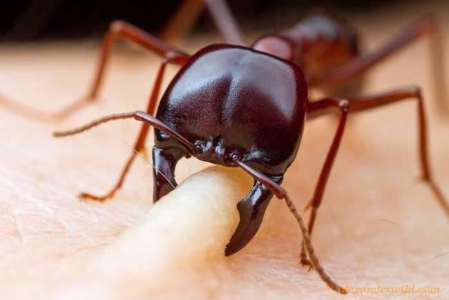 ants%20123.jpg