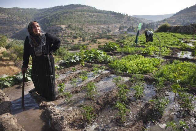 """زراعة """"بتير"""" الفلسطينية"""
