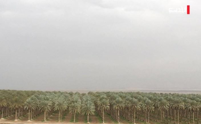 متابعة الحدث   أراضي أريحا: يدٌ إسرائيلية على آلاف الدونمات