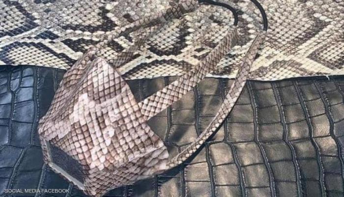 في زمن كورونا.. كمامات من جلود الثعابين