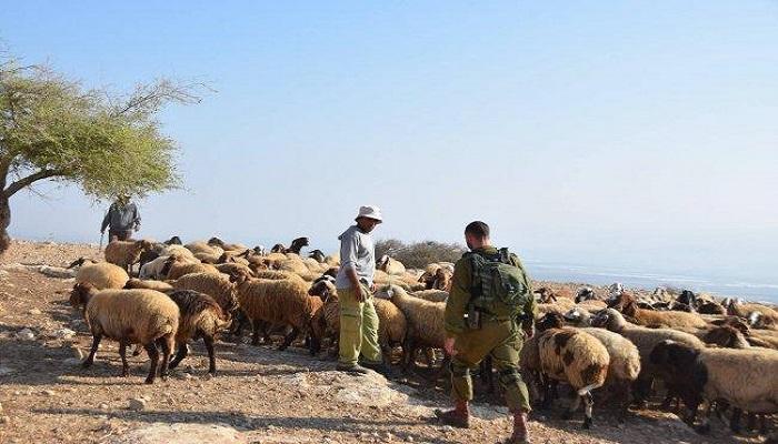 جيش الاحتلال يسرق 500 رأس ماعز من الأراضي اللبنانية